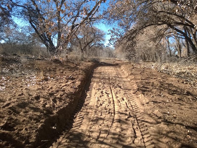 Photo of Albuquerque bosque with city-bulldozed trail