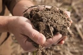 Developments around the NM Healthy Soil Act